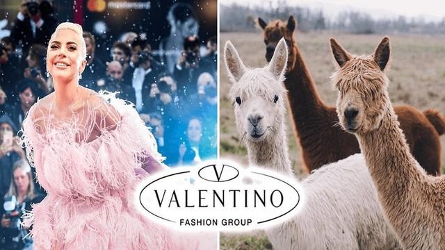 Valentino trở thành thương hiệu xa xỉ đầu tiên cấm len Alpaca